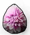Dahlia (E)
