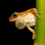 File:Frog.jpg