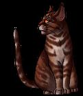 Tigerstar.deputy