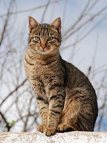 File:220px-Cat November 2010-1a (1).jpg