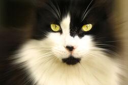 My cat, Malcolm.