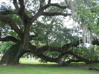 File:Great-oak-mag.jpg