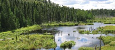 Front-marsh