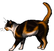 Maplestar.adult