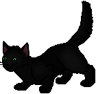 Hollyleaf.apprentice