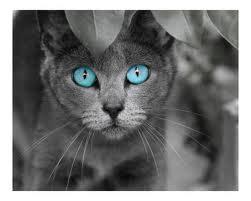 File:Silver kitty.jpg
