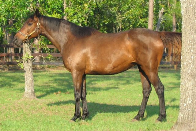 File:Filly 17may05 001.jpg