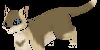 Bunnyfur
