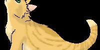 Nutbloom