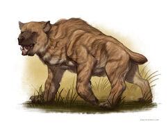 Nandi Bear-1-