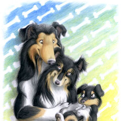 Werecollies Brian and Nicole Digg welcome a precious baby boy, Peter, to the family...