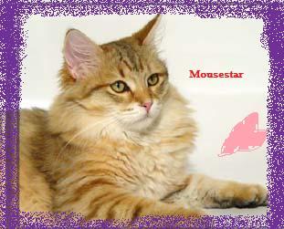 File:Mousestar.jpg