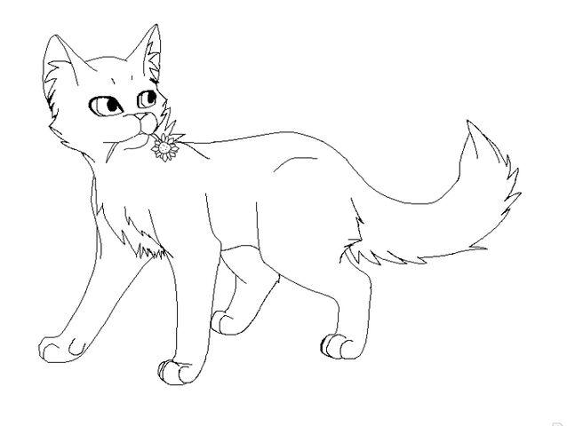File:Med.Cat.jpg