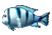 Insignia Fish 52x35