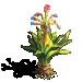 Kyanite Plant