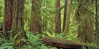 Queets Rainforest