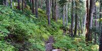 Bogachiel Rainforest