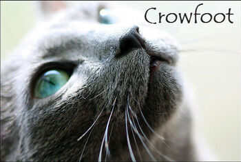 Crowfoot