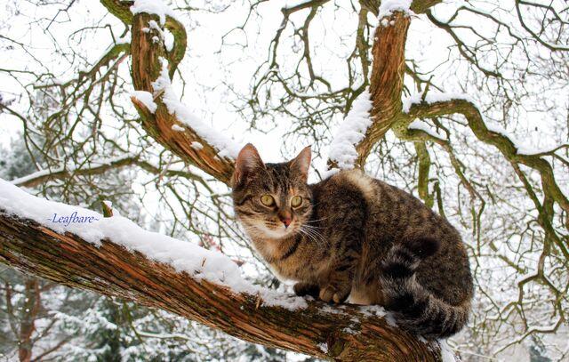 File:Winter-2.jpg
