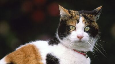 Cat muzzle collar spotted 89400 1920x1080