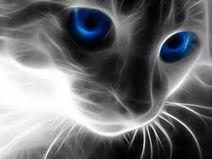 File:Spiirit cat.jpg