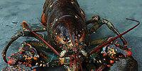Street Lobsters