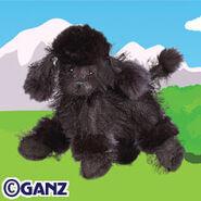 Preview black poodle