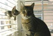 ANT AVA'S CATS