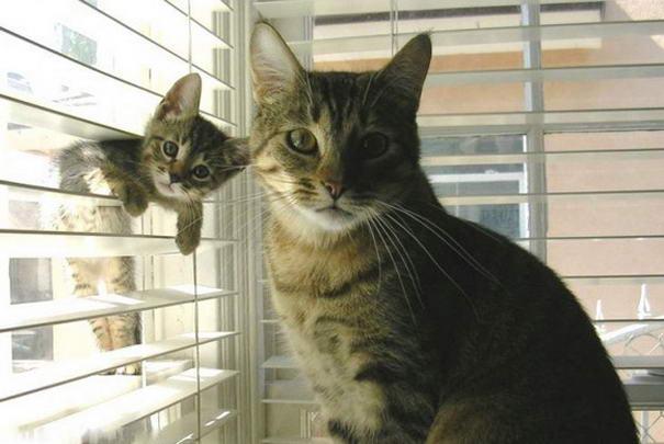 File:ANT AVA'S CATS.jpg