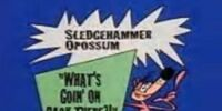 """Sledgehammer O'Possum: """"What's Goin' On Back There?!"""""""