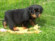 F litter green boy first day outside