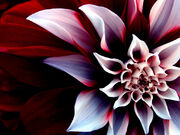 Beautiful-Enigmatic-Flower-1-