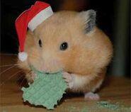 Goldie hamster