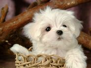 Cute-Puppy-puppies-15813268-1024-768