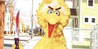 Big Bird Falcone