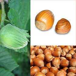 File:Hazelnuts.jpg