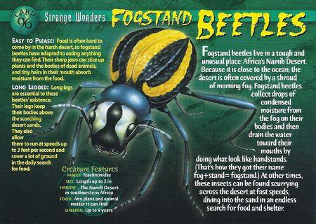 Fogstand Beetles front