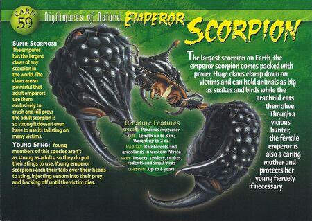 Emperor Scorpion front