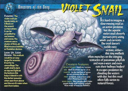 Violet Snail front