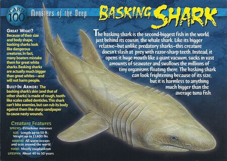Basking Shark front