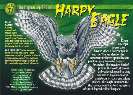 Harpy Eagle front