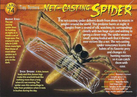 Net-Casting Spider front