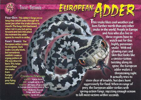 European Adder front