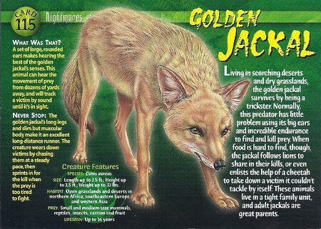 Golden Jackal front