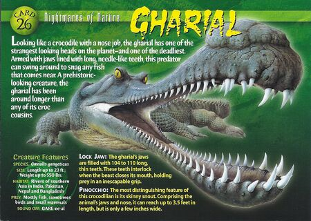 Gharial front
