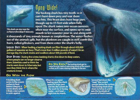 Basking Shark back