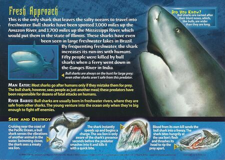 Bull Shark back