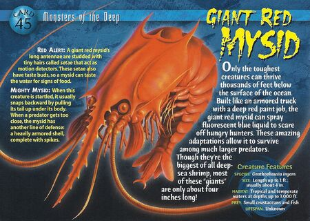 Giant Red Mysid front