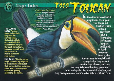 Toco Toucan front