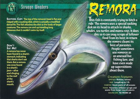 Remora front